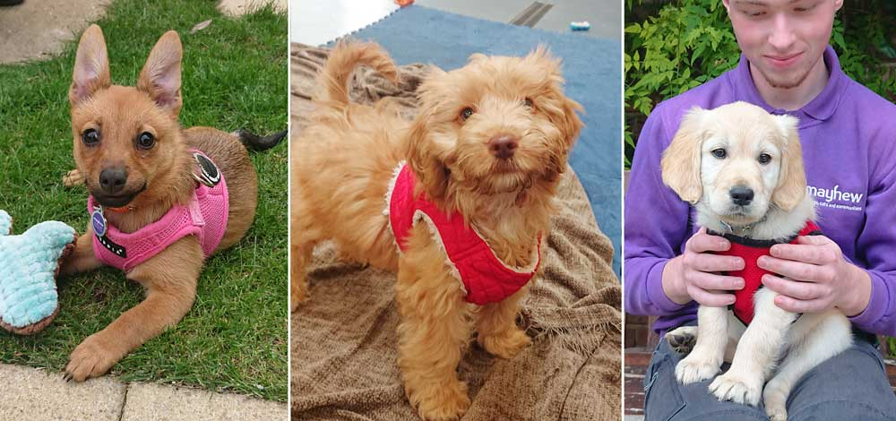 puppies for sale rehoming