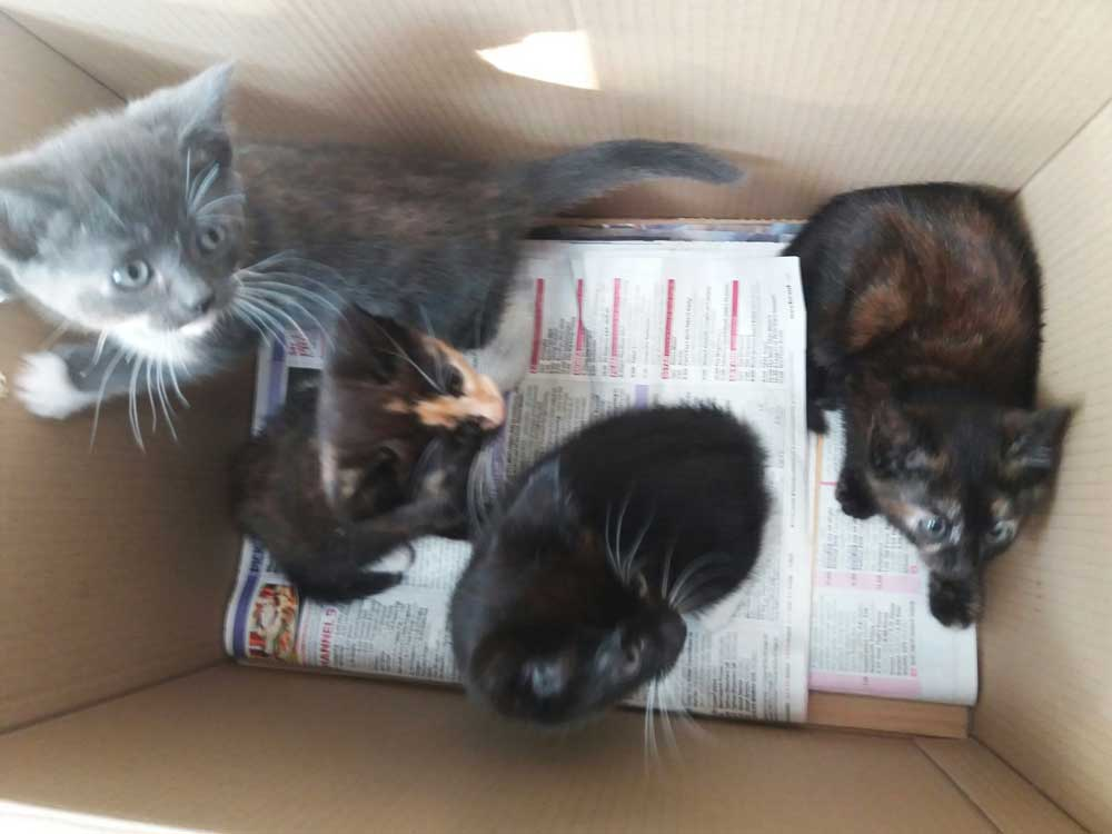 abandoned kittens in box