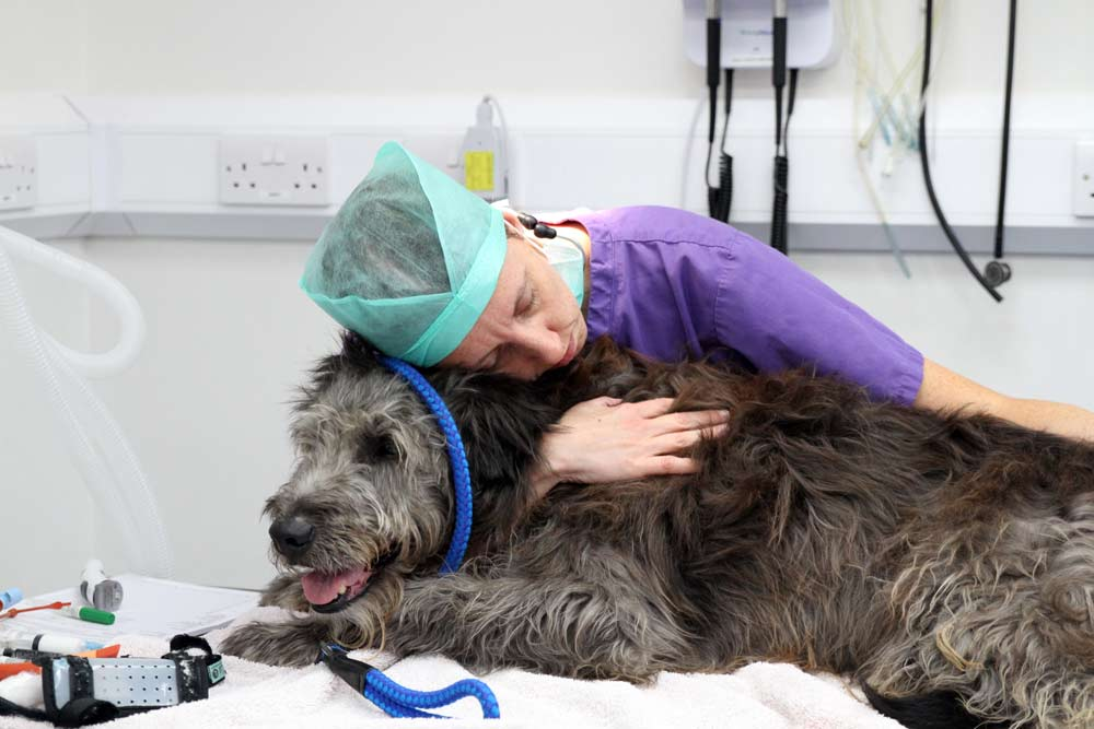 oscar large wolfhound dog
