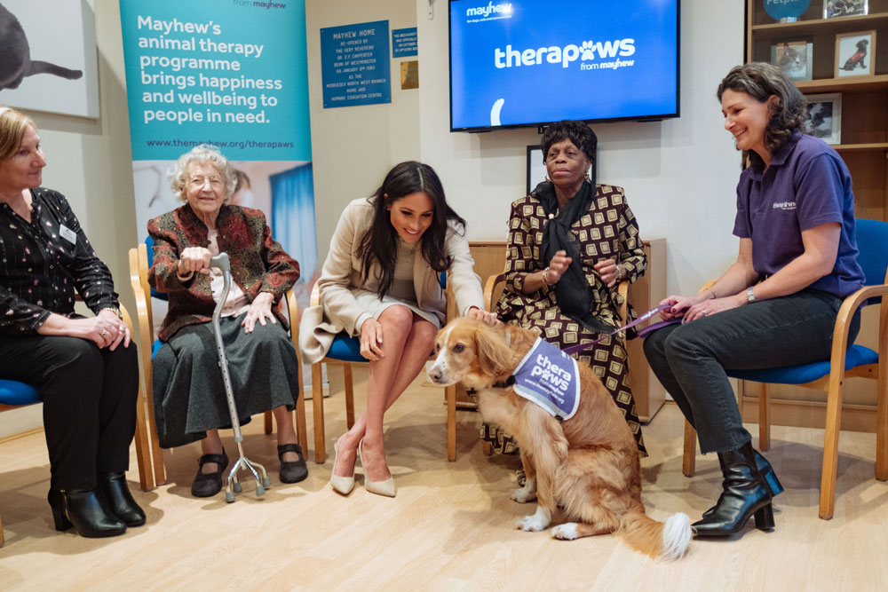 Duchess of Sussex meets Therapy dogs at Mayhew