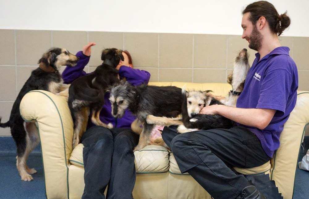 Josh and Chloe with Saluki puppies