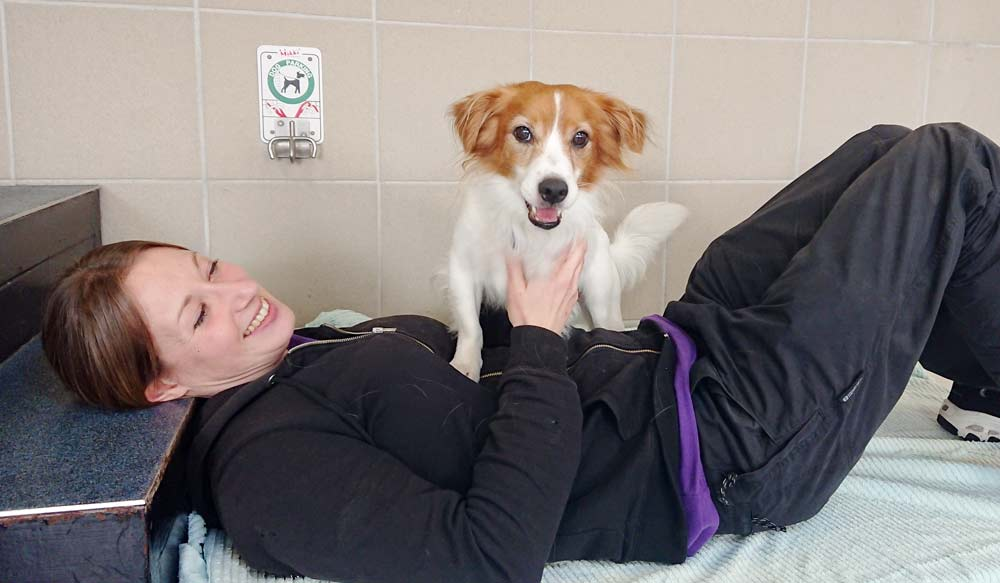 cesar papillon jack russell cross with maria