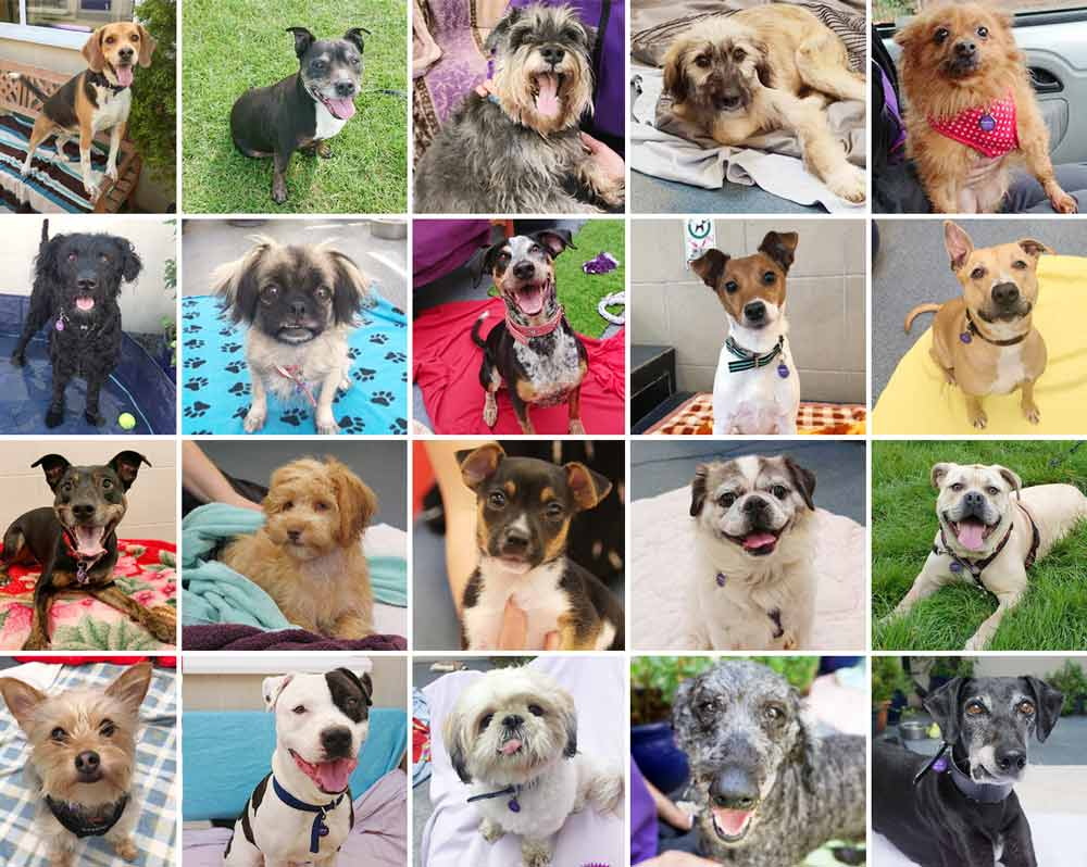 rehomed rescue dogs from Mayhew