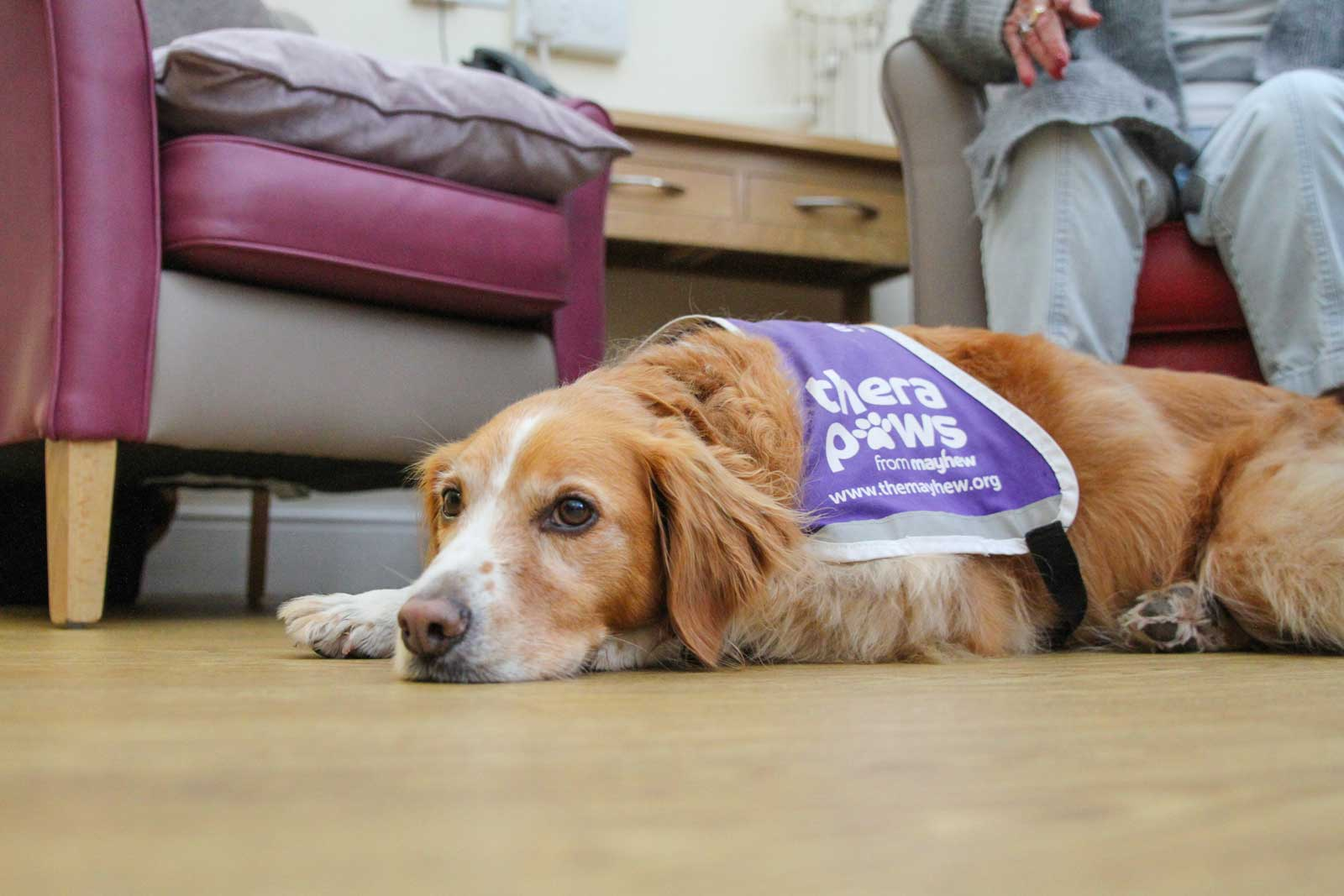 Mayhew and Middlesex University research animal assisted therapy roobarb therapy dog