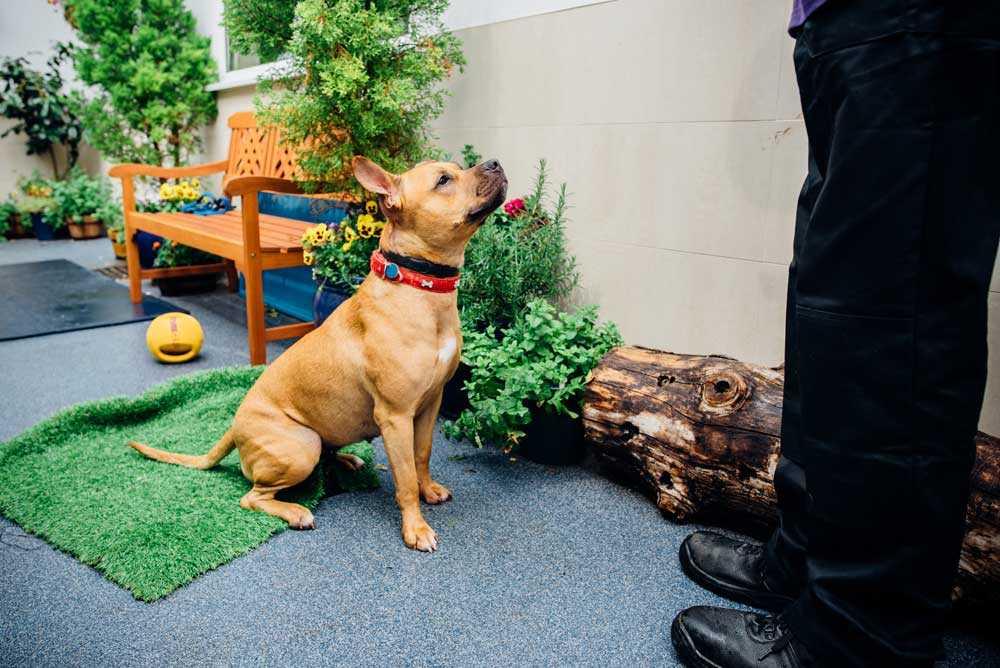 Winnie in sensory garden