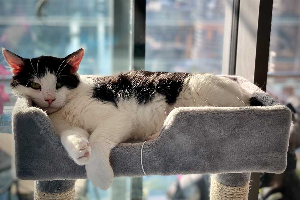 Happily rehomed cat