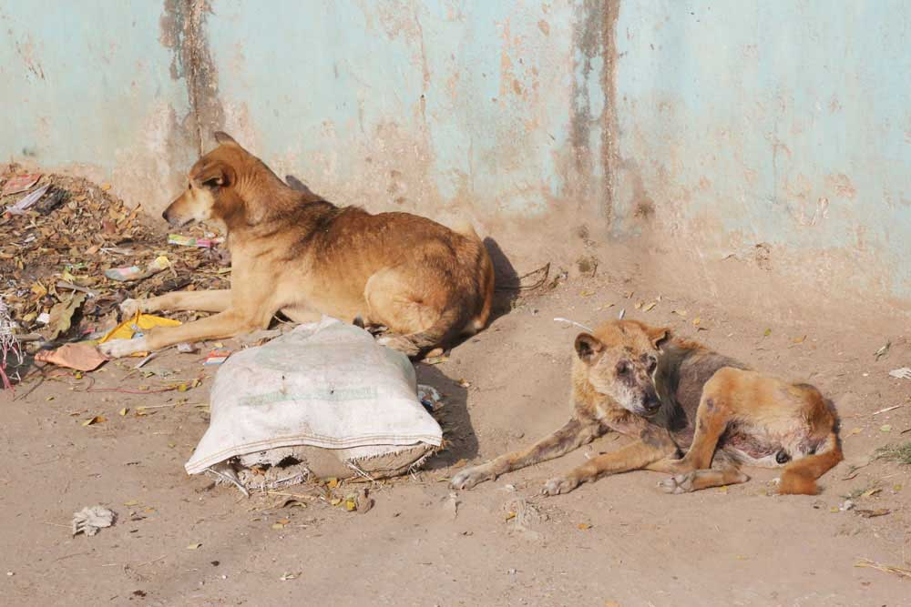 Mayhew in India