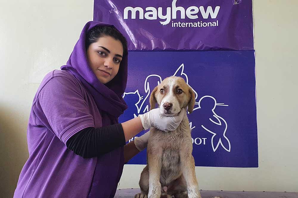 Mayhew Afghanistan Volunteer